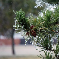 City Manager's Update: Ice Storm Debris Removal